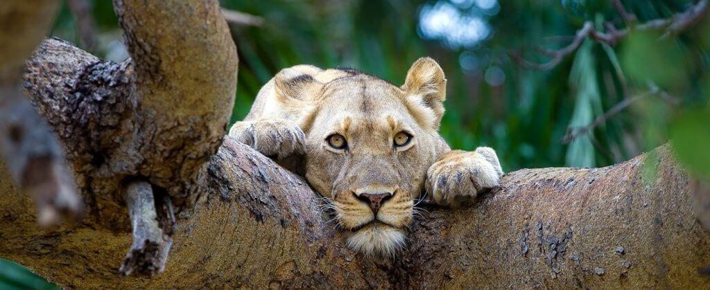 Safari Austral | Safari Austral | Viajes Planeta Azul