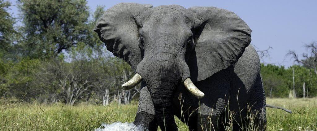 Botswana | Botswana | Viajes Planeta Azul
