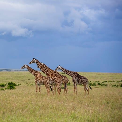 Kenya | Viajes Planeta Azul