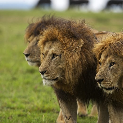 El Mejor Safari de África | Viajes Planeta Azul