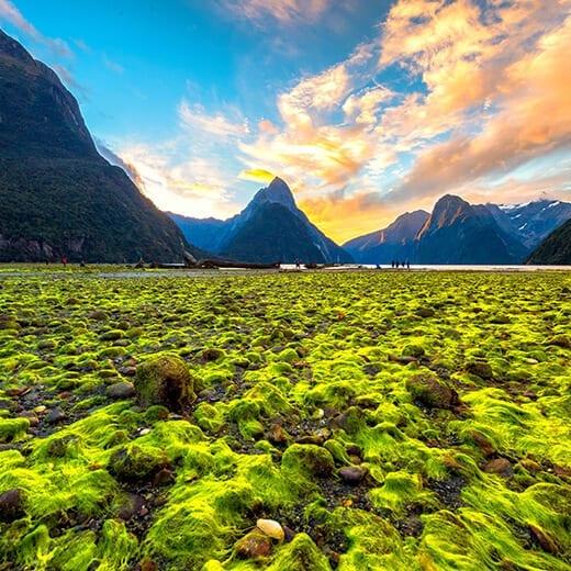 Nueva Zelanda | Viajes Planeta Azul