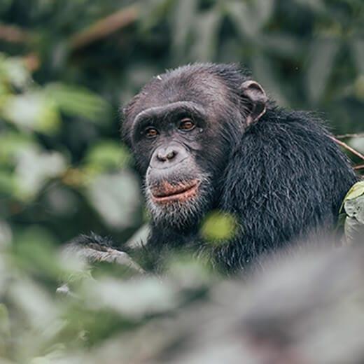 Uganda | Viajes Planeta Azul