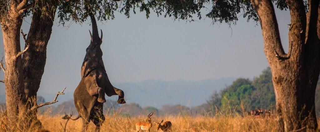 Zambia | Zambia | Viajes Planeta Azul